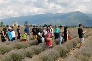 Туристи от Индонезия посетиха лавандулови полета край Карлово